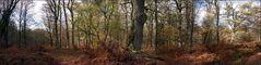 Ur-Wald-Blick