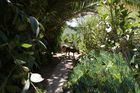 Uraldpfad in afrikanischen Garten