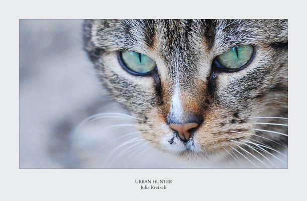 Urban Hunter