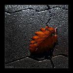 urbane Herbstimpression