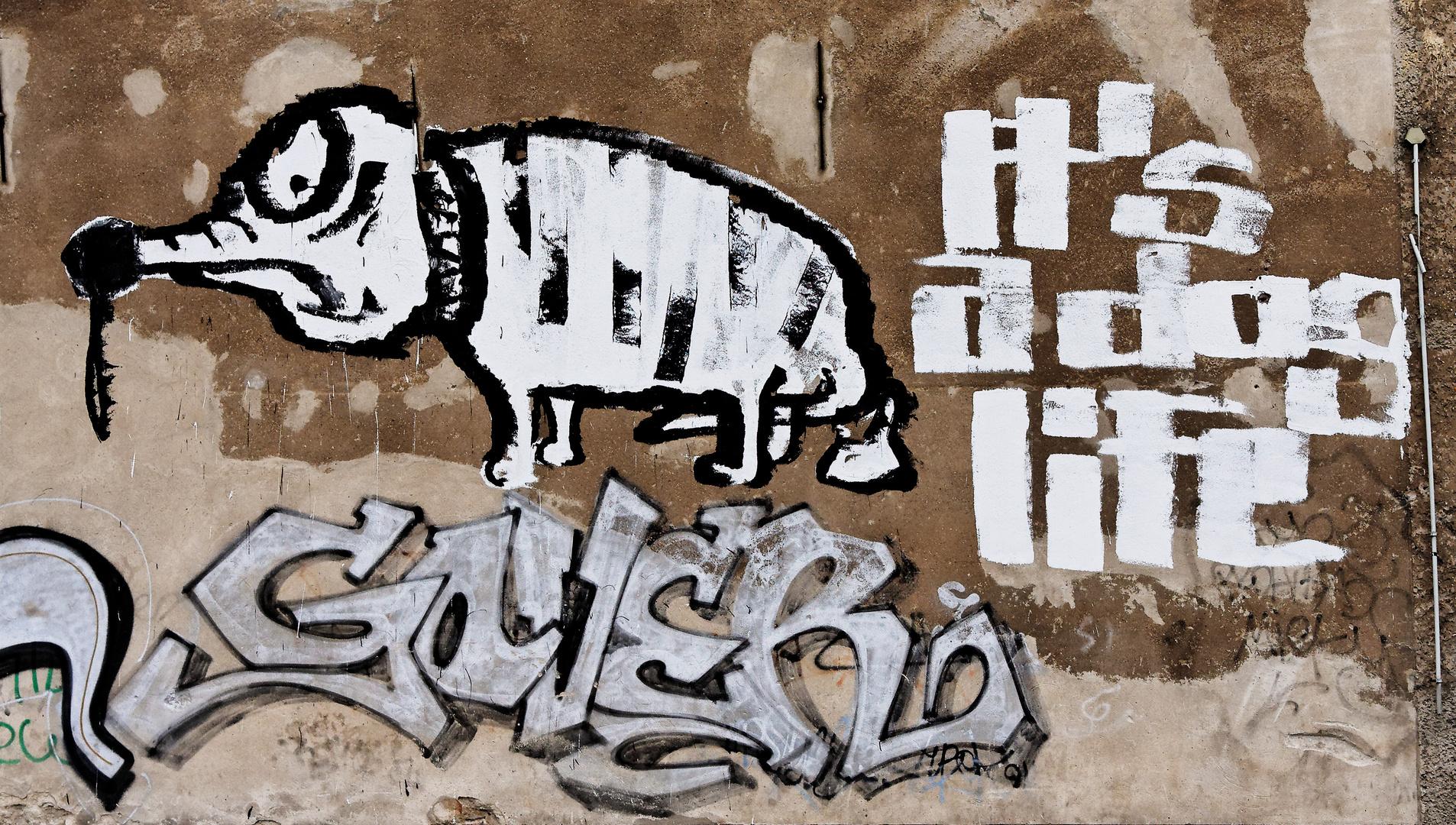 Urbanes - it's a dog life