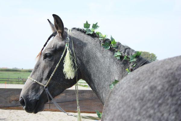 Urbi, cheval des Elfes
