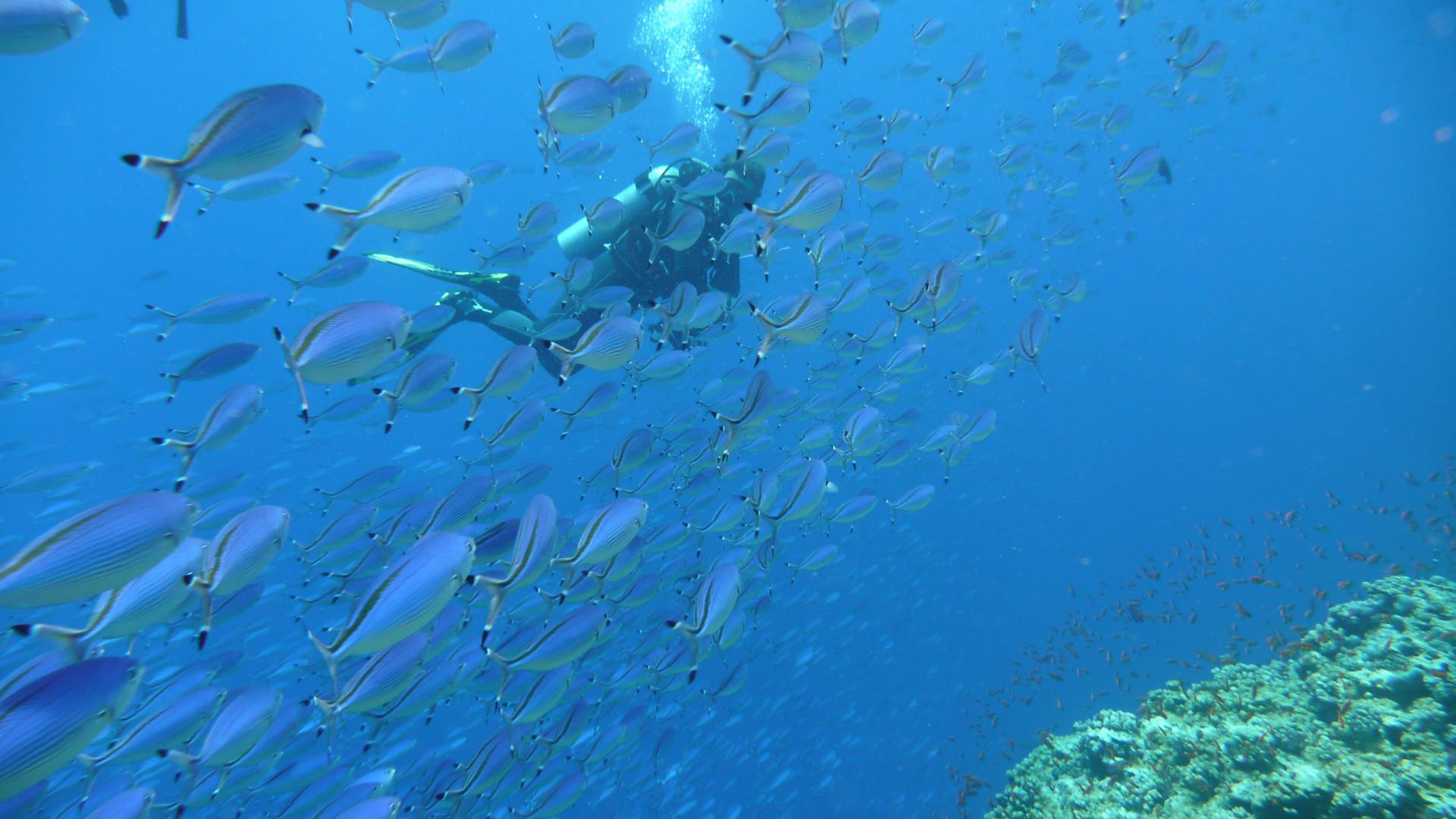 Urlaub 2014, Marsa Alam, Ägypten, Elphinstone Reef
