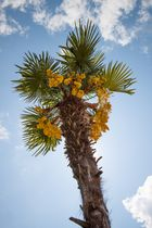 Urlaub unter Palmen