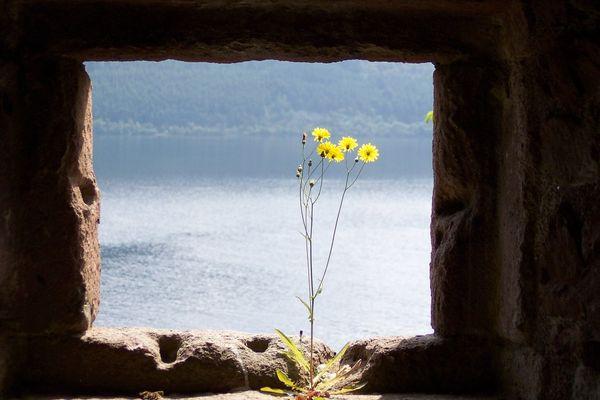 Urquhart Castle: Blume im Fenster