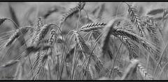 Ursprung des Brotes
