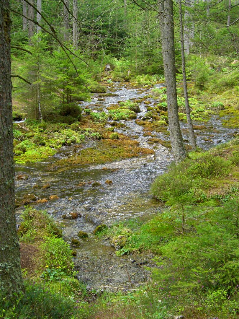 Ursprung im Wald