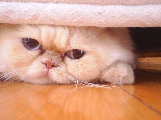 urucão abaixo da cama serio