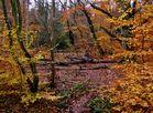 Urwald Altdarß_im November