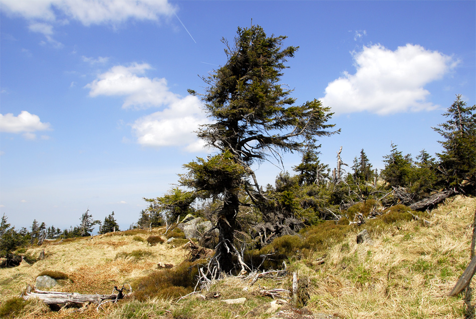 Urwald am Brocken