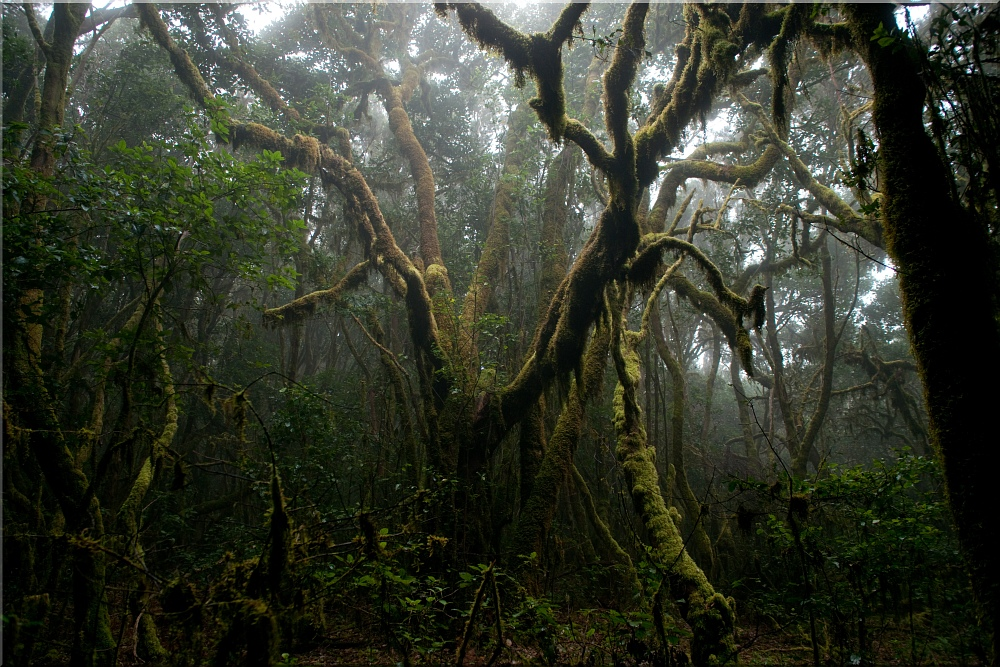 Urwald - El Cedro