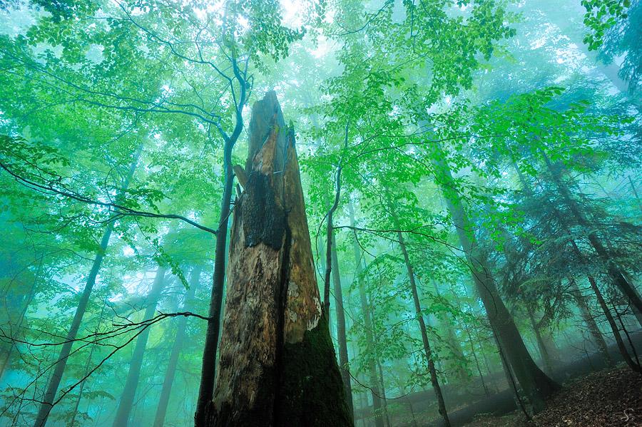 Urwald in den Karpaten
