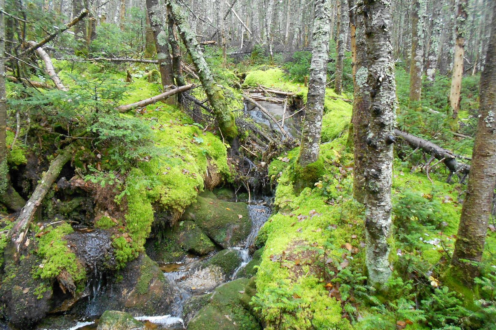Urwald in den Snowy Mountains USA