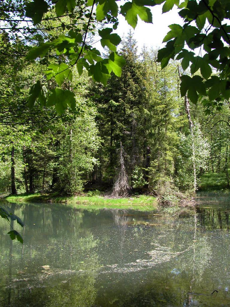 Urwald in Thüringen