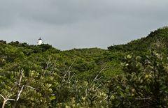 Urwald mit Leuchtturm