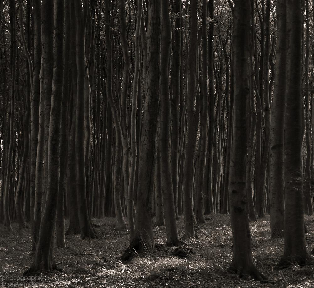 Urwald (nachbearbeitet)
