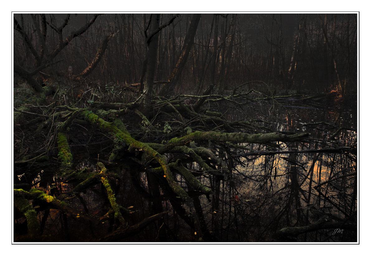 Urwald oder Natur pur