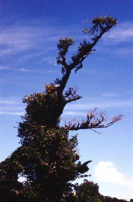 Urwaldbäume