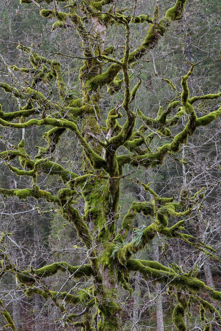 Urwaldbaum um die Ecke