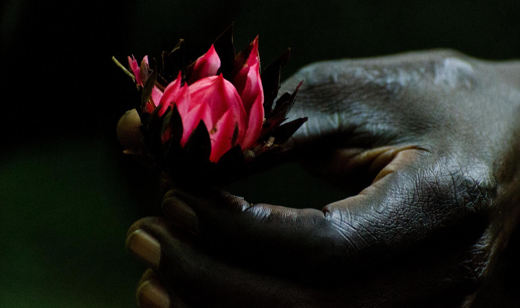 Urwaldblüte