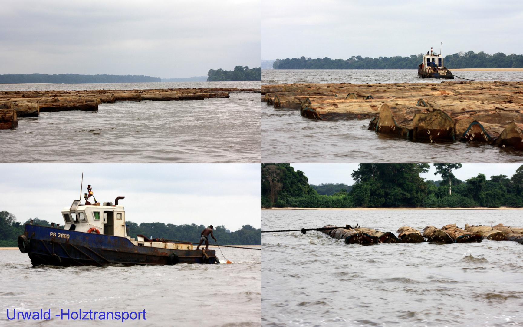 Urwaldholz beim Transport im Fluss