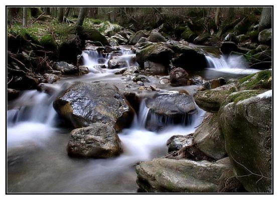 Urwaldwasser