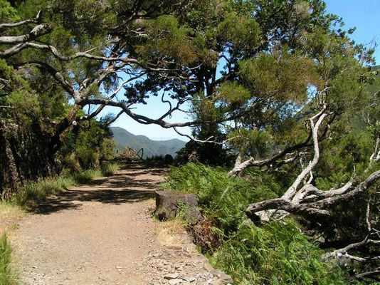 Urwüchsig - Heide- und Lorbeervegetation auf Madeira