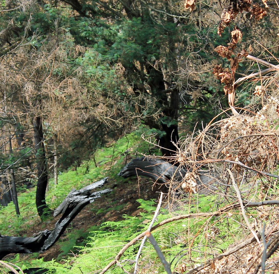 Urzeitmonster im Wald