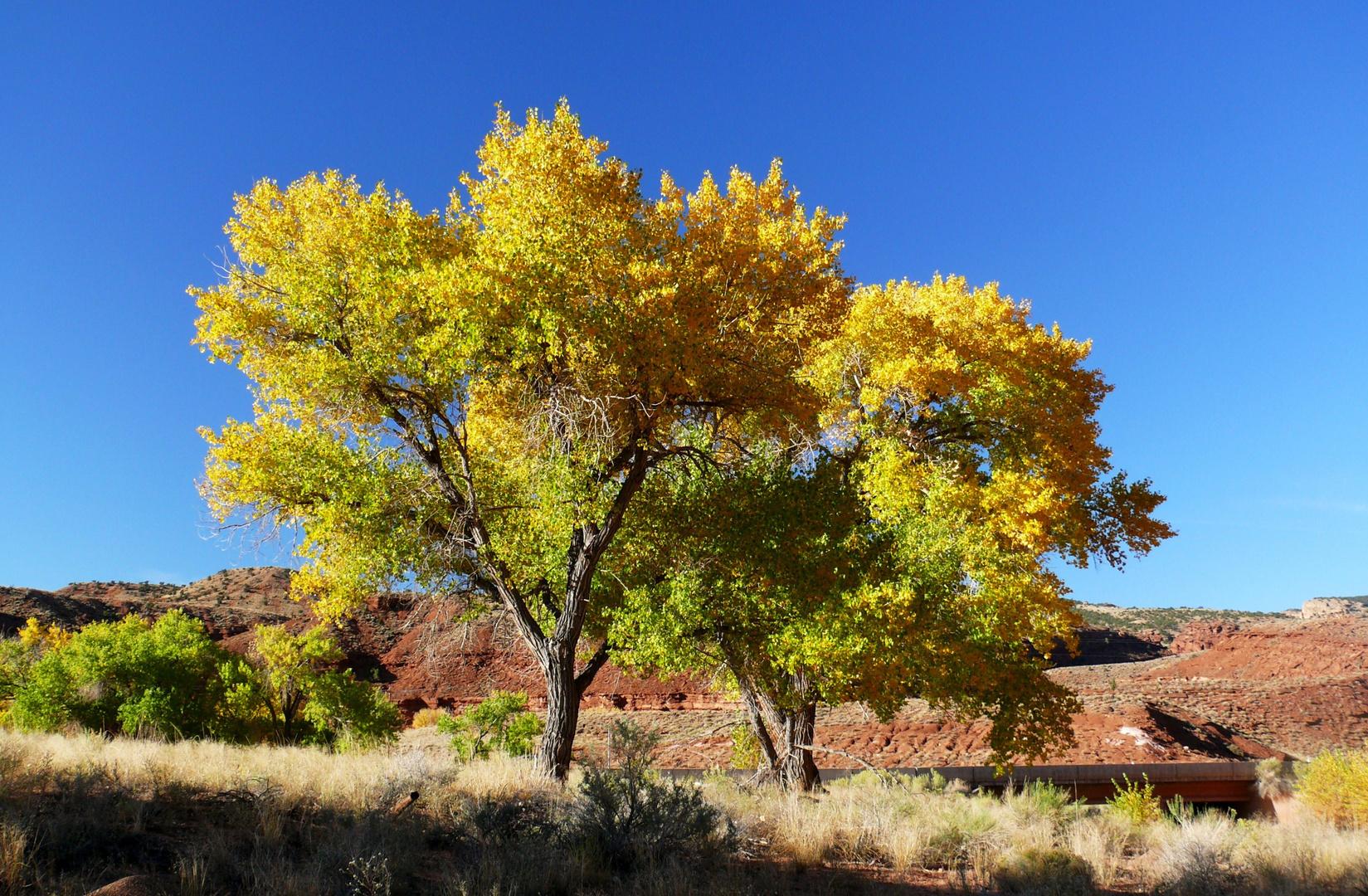 """USA 2011 - Autorundreise """"Grand Circle"""" - Der Herbst war auf der Tour überall gegenwärtig"""