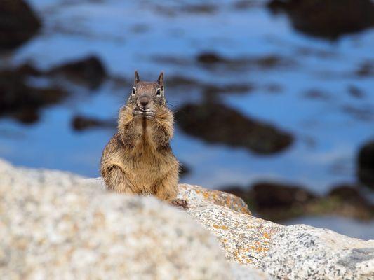 USA / California / Wildlife /