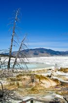 USA - Mammoth Springs
