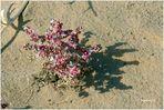 Usbekistan - Ajaz Kale - Büten in der Wüste