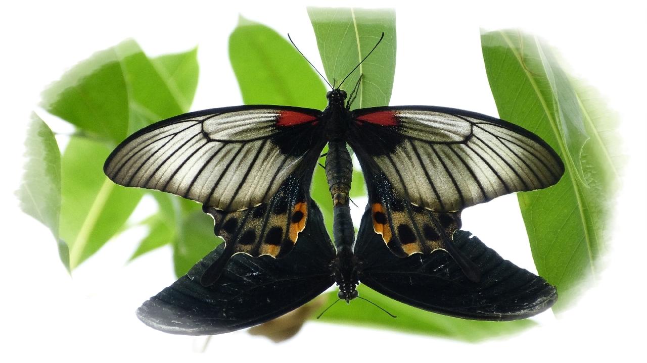 Usertreffen Insektenmuseum & Schmetterlingsfarm Steinhude
