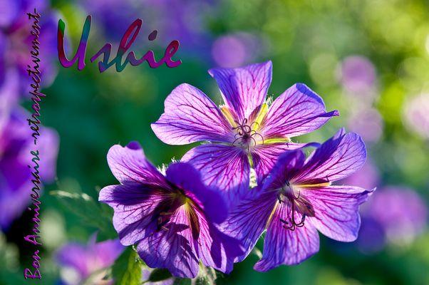 Ushie