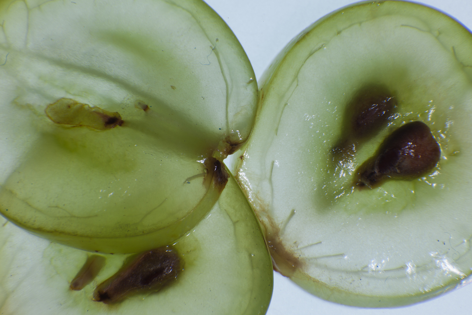 Uva laminada