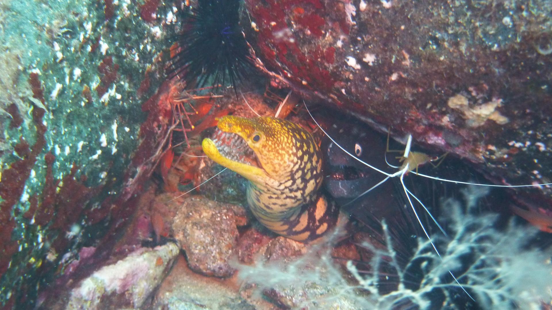 UW- Symbiose im Atlantik