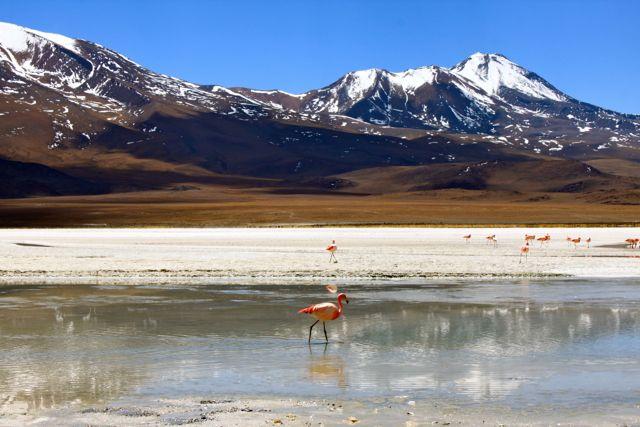 Uyuni Salt Desert (Bolivia) - Pink Flamingos