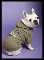 V I D - very important dog