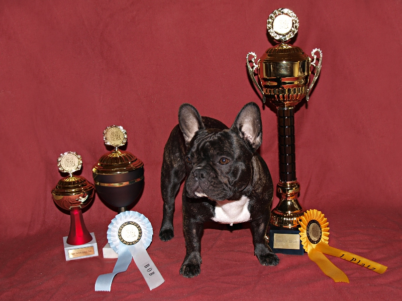V1 CACIB, Best of Breed, Best in Show.