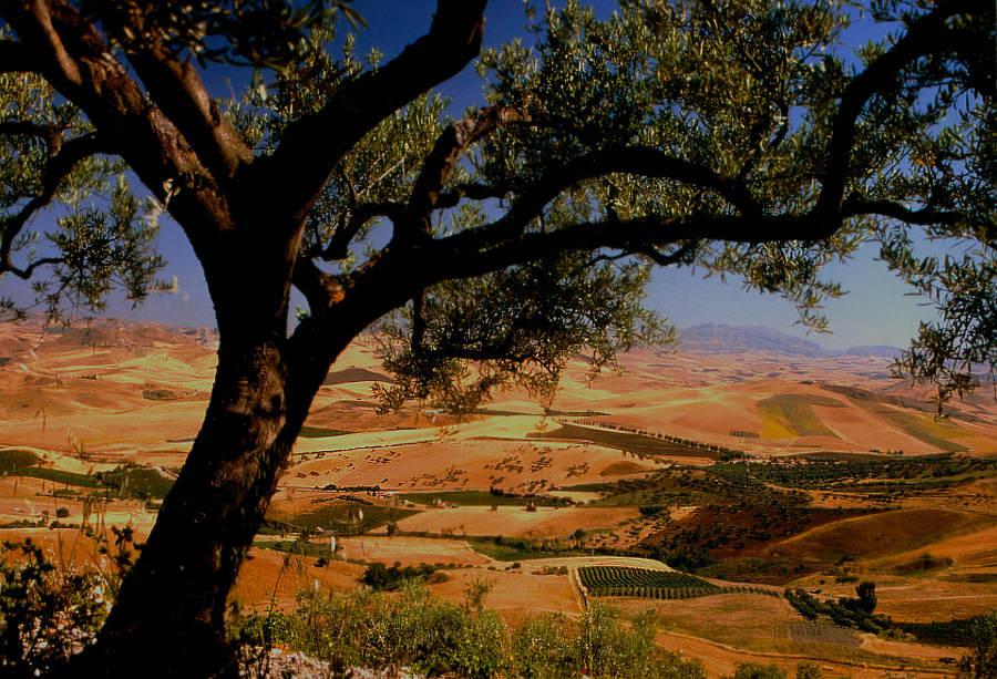 "Vaccarizzo -  ""Die Kornkammer  Roms"" - auf Sizilien I"