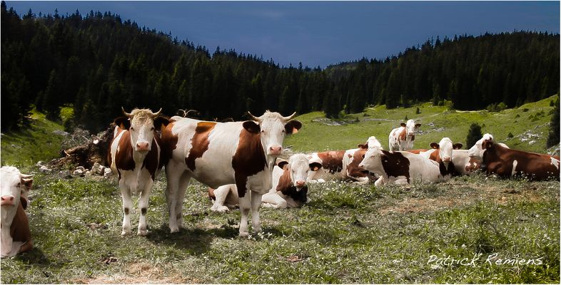 vache de paysage