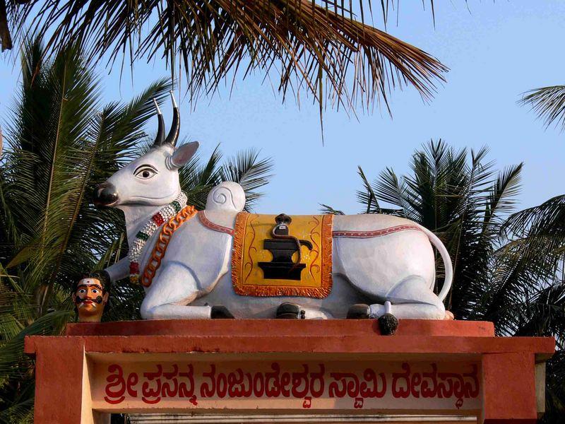 Vache sacrée / Holy cow