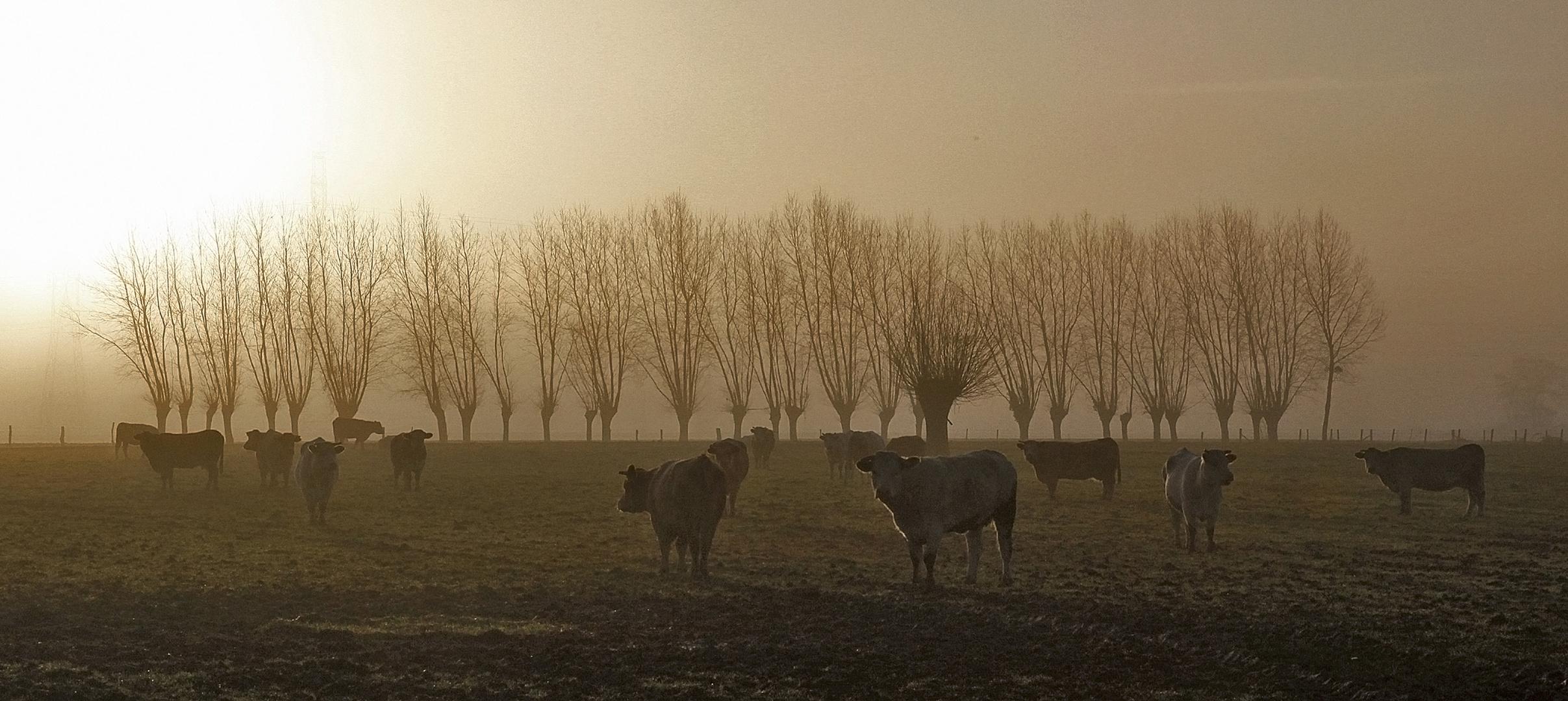 Vaches et Têtards