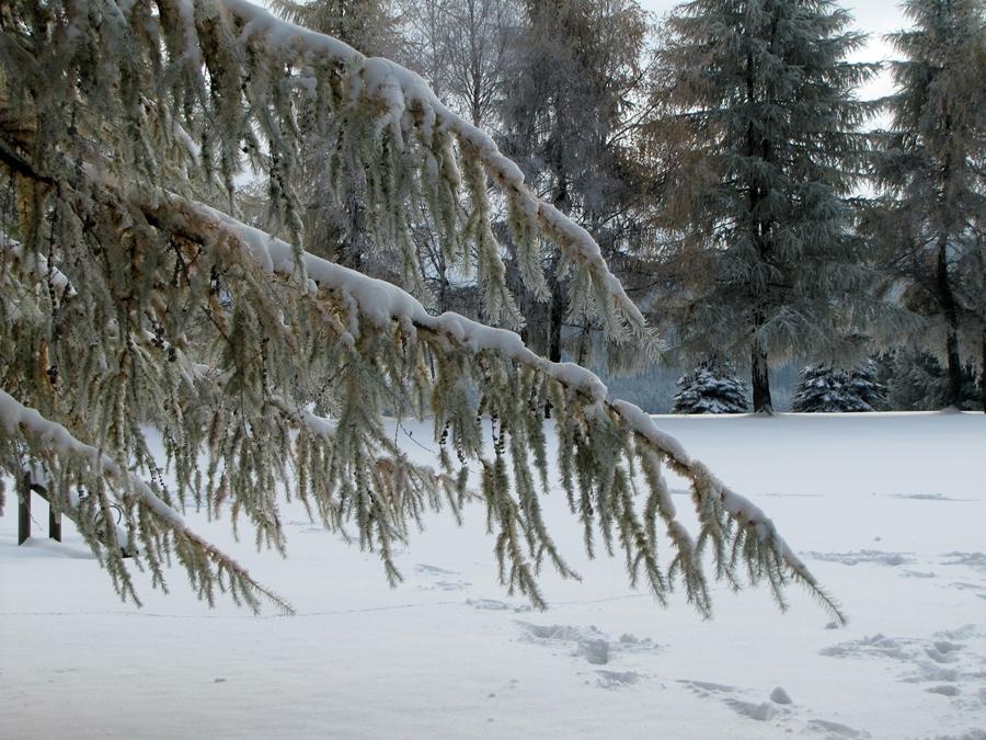 Väterchen Frost hat zugeschlagen.