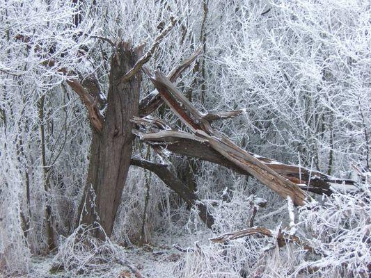 Väterchen Frost lässt grüßen...