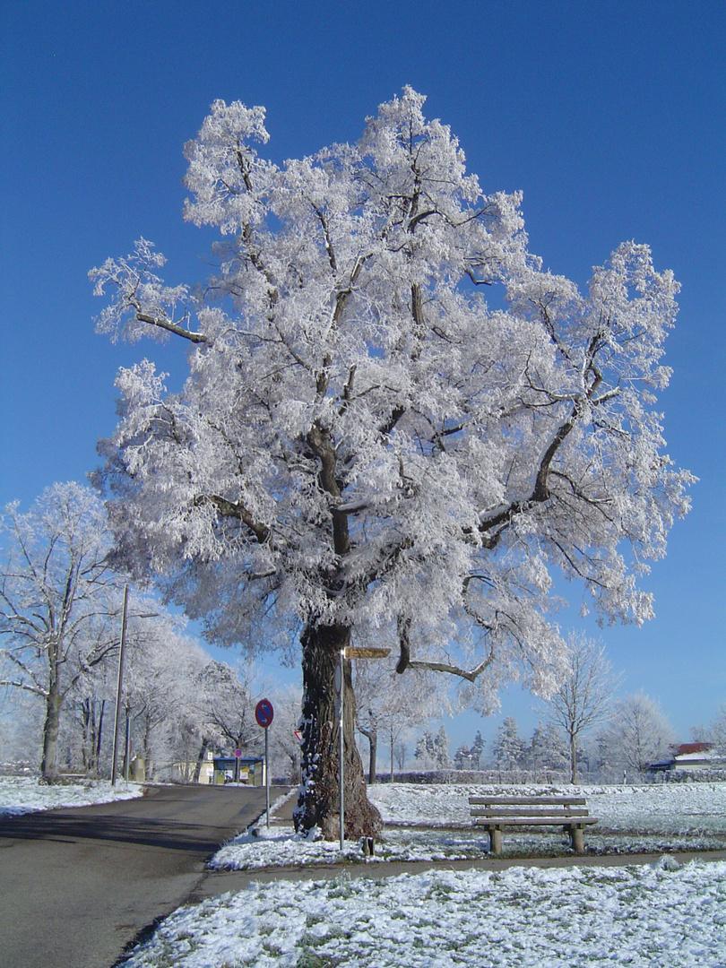 Väterchen Frost und der alte Baum