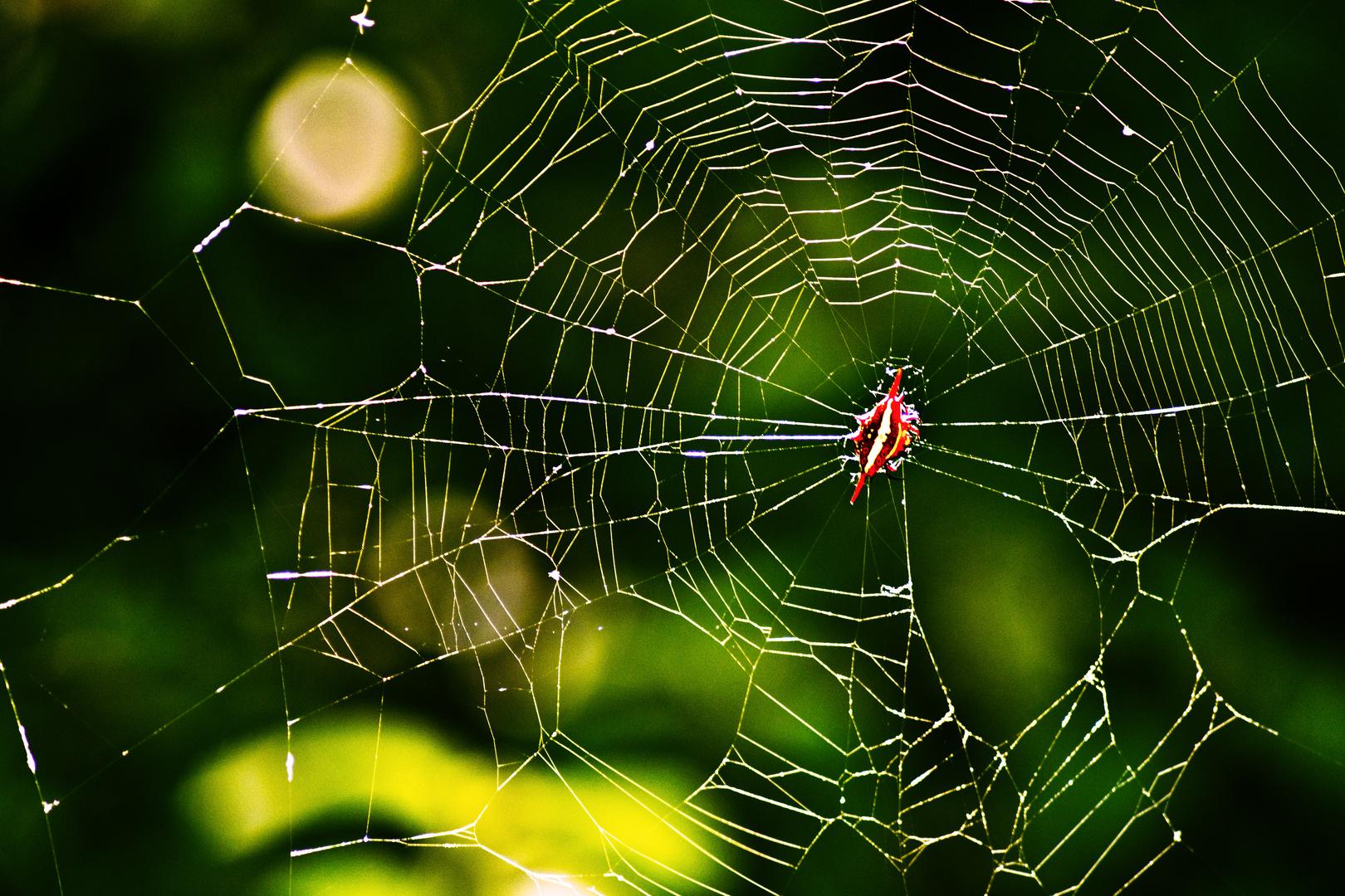 Vagina Spider