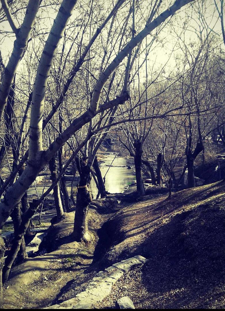 Vakil Abad Jungle Park (in Iran)