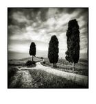 Val d'Orcia # 12