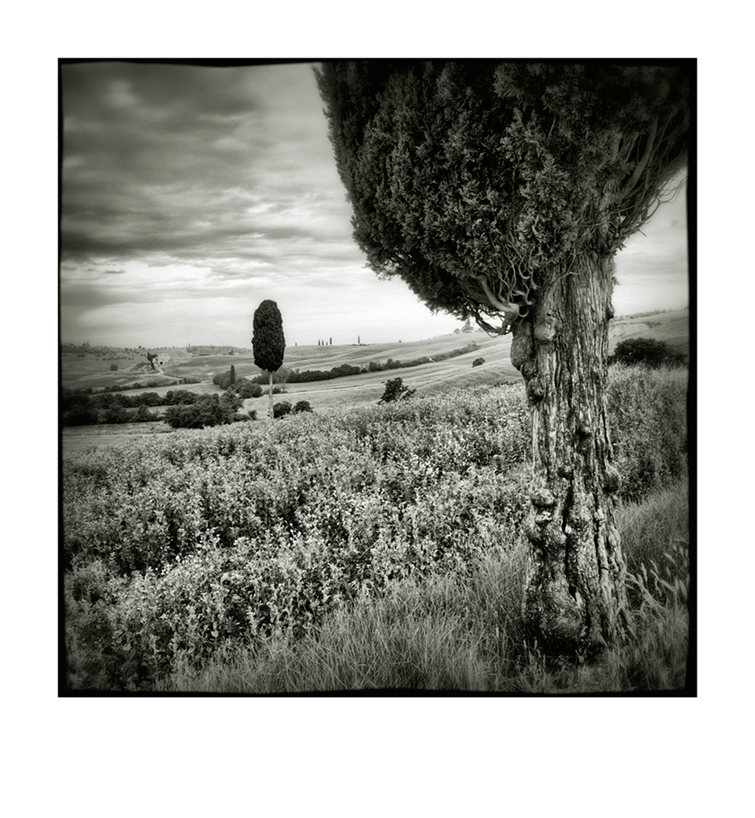 Val d'Orcia # 13